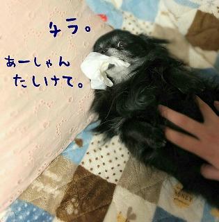2017-03-12_21_69379.jpg