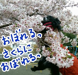 2017-04-09_14380_noexif.jpg