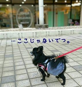 2017-04-20_212429.jpg