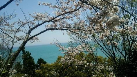 桜と駿河湾