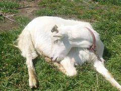 【写真】春の陽射しを受けてスヤスヤ眠るアランの様子