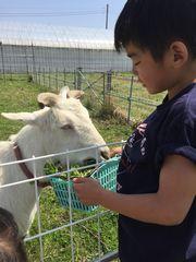 【写真】ネイビーのポレポレTシャツを着た瑛大くんがアランに餌をあげているところ