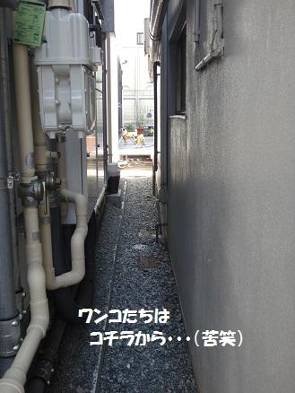 DSC03818 - コピー
