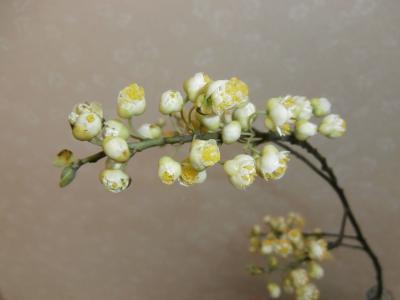アオモジの花Ⅱ
