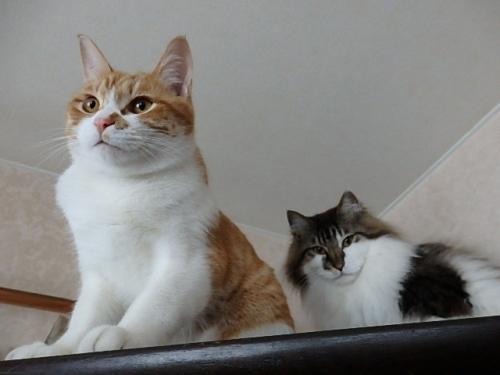 チャーミーとフワちゃん