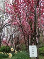 天神山ガーデン