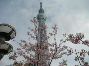 日帰り弾丸東京ツアー5