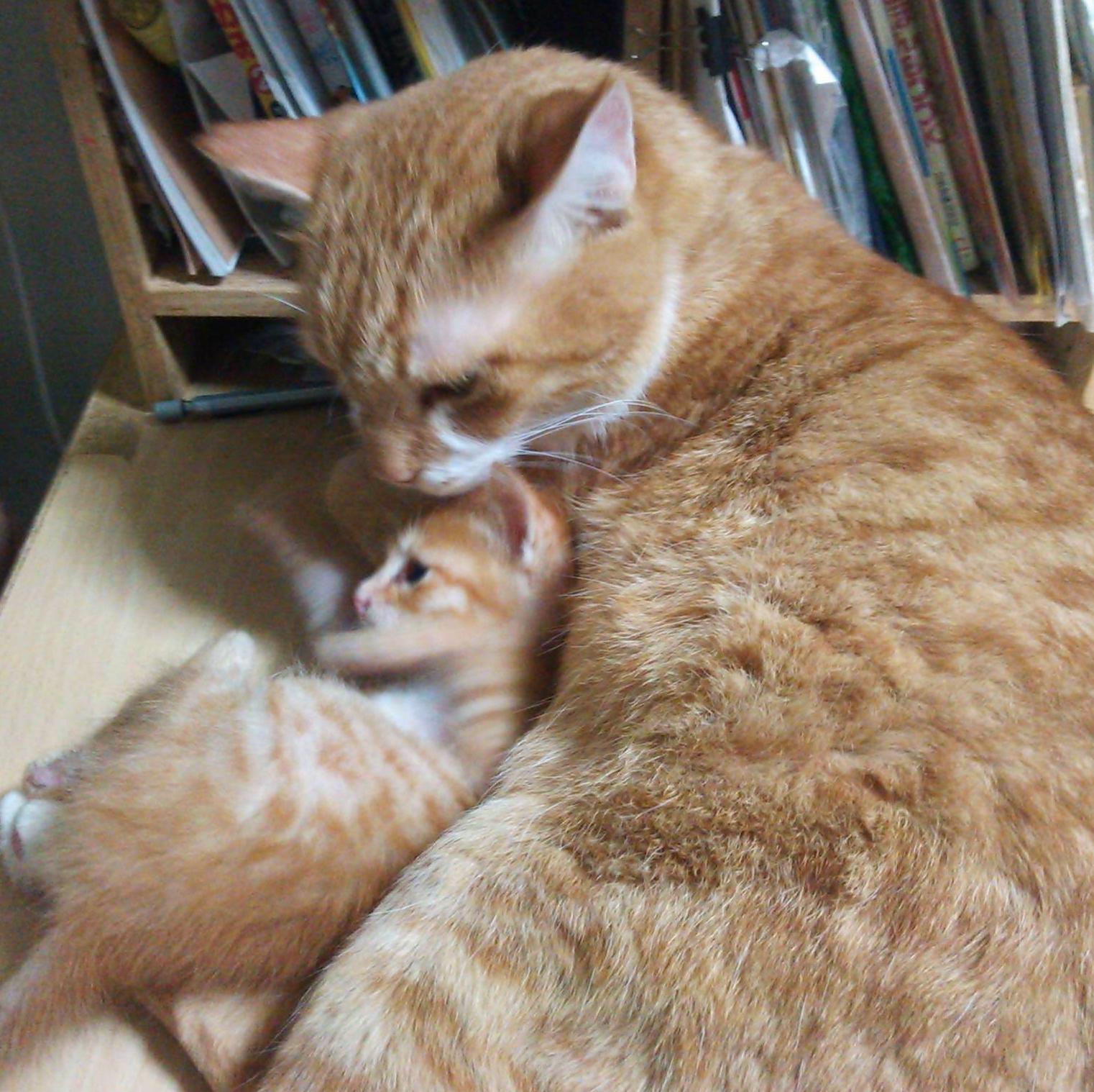 アグネス猫2016-8