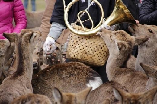 奈良鹿5マッターホルンで奏でると、鹿がどんぐり欲しさに集まってくる