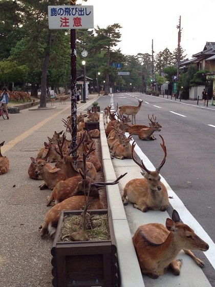 鹿の交通事故を防ぐために設置された標識2