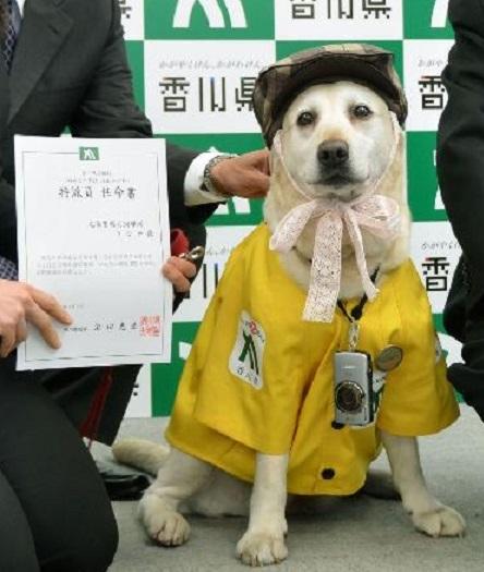 香川県の広報誌の特派員に任命された県警の嘱託警察犬「きな子」