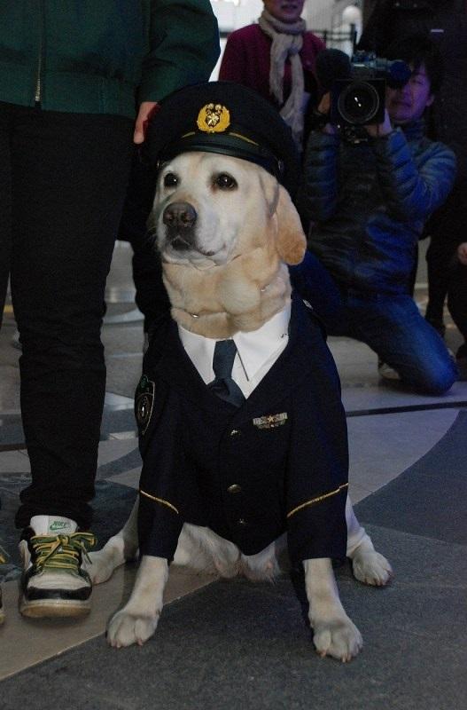 警部用の制服で振り込め詐欺防止キャンペーンに登場したきな子=2010年12月15日3