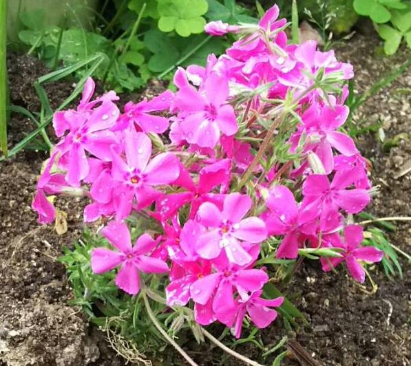 ミーママの実家のお花12