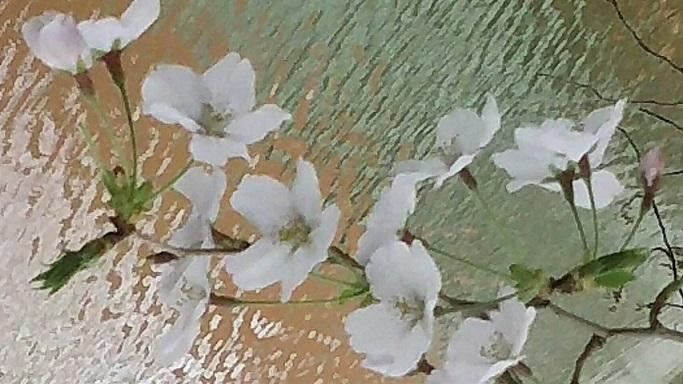 お堀の桜。美しいてますが、人に知られていない歌うような楽園の桜と比べると歌ってなく寂しそうに感じます3