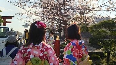 鎌倉の早春3
