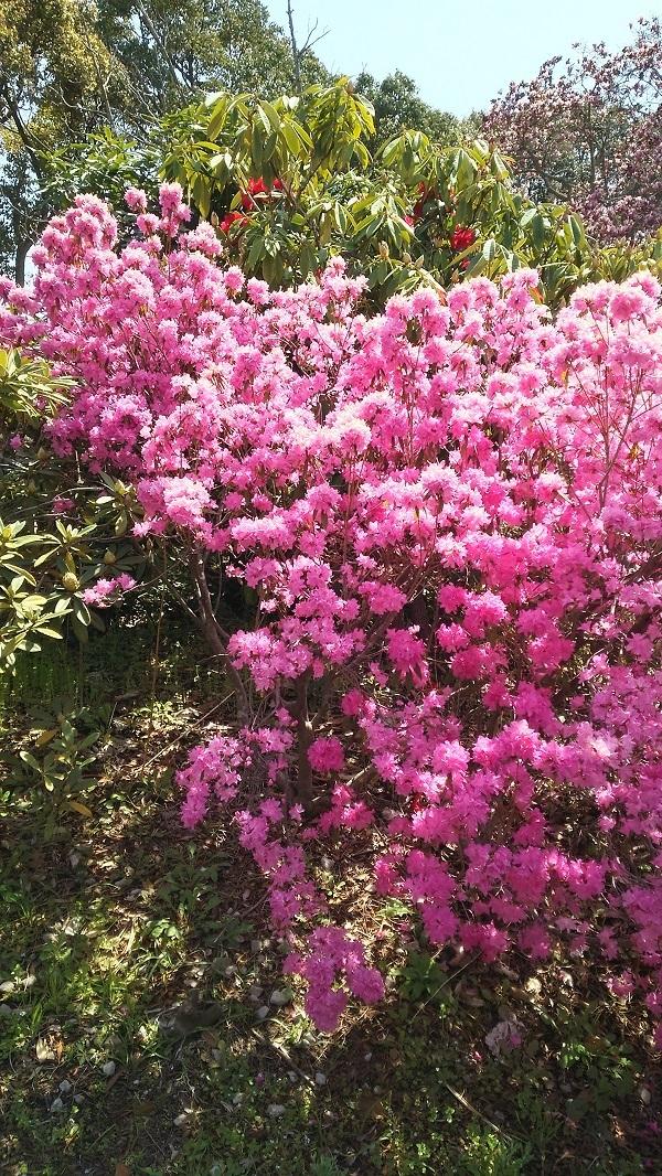 立ち木の花1