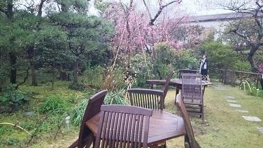 庭の枝垂桜
