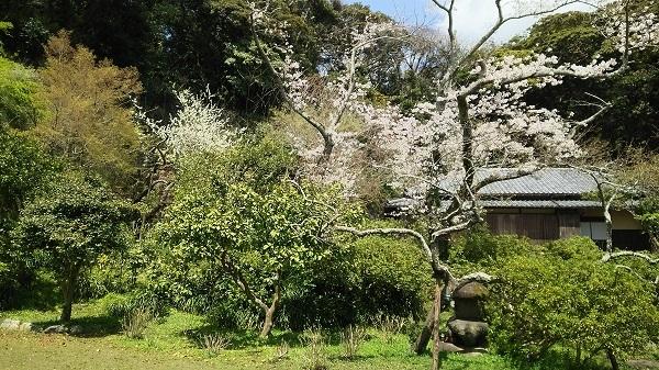 川喜多映画記念館の庭1