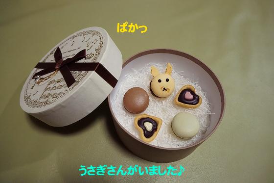 ぴょん子170215_01