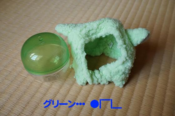 ぴょん子170219_01