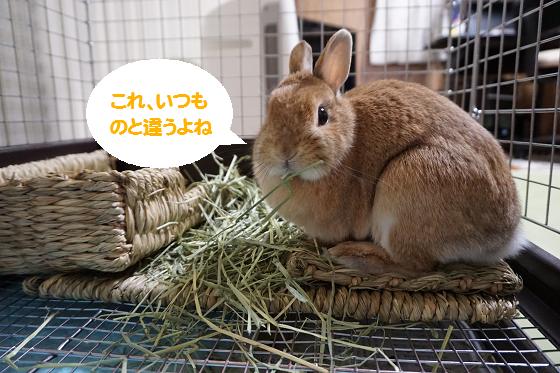 ぴょん子170312_01