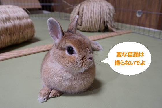 ぴょん子170331_04