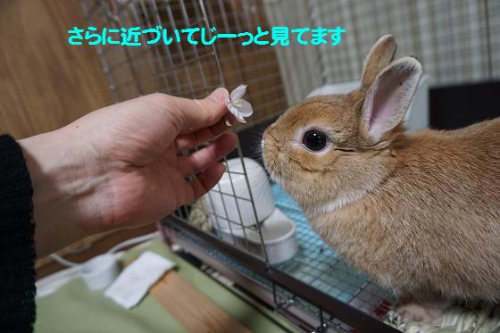 ぴょん子170405_03