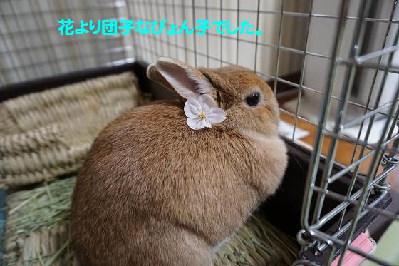 ぴょん子170405_06