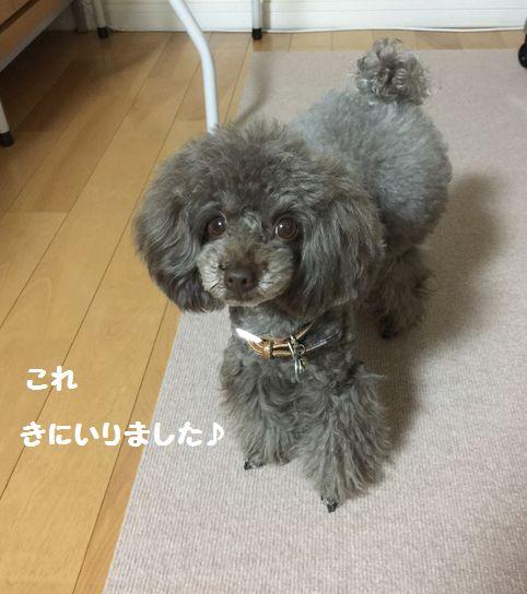 IMG_02273.jpg