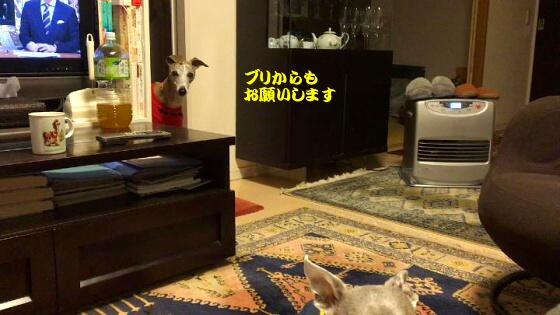 IMG_1366_5.jpg