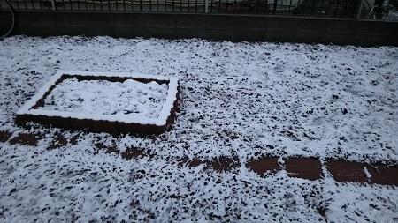 春の雪DSC_0201