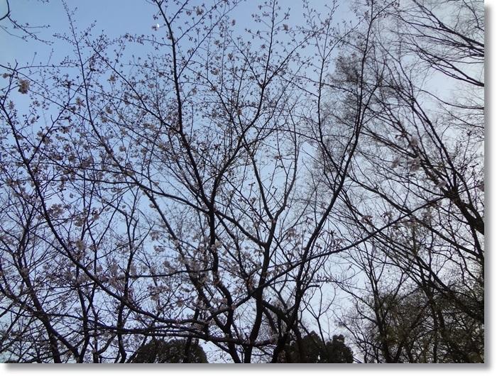 茅ヶ崎中央公園DSC09918