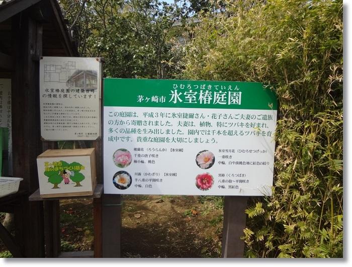 氷室椿庭園DSC09953