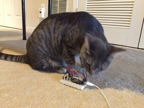 20170221a_Cats Love tue IoT _06