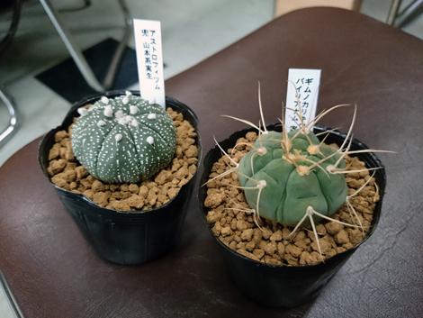 20170129京都新年会_福引