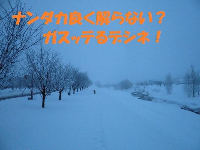 CIMG4279_P.jpg