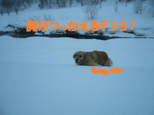 CIMG4287_P.jpg