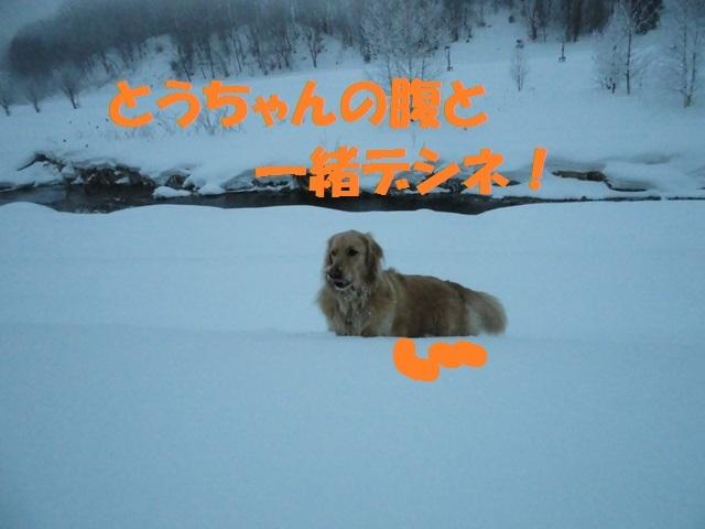 CIMG4289_P.jpg