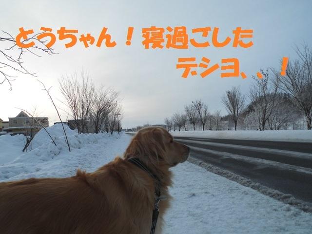 CIMG4290_P.jpg