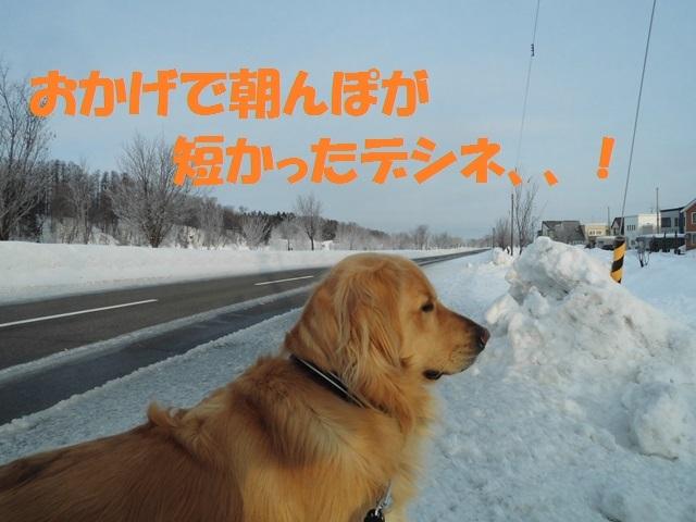 CIMG4292_P.jpg
