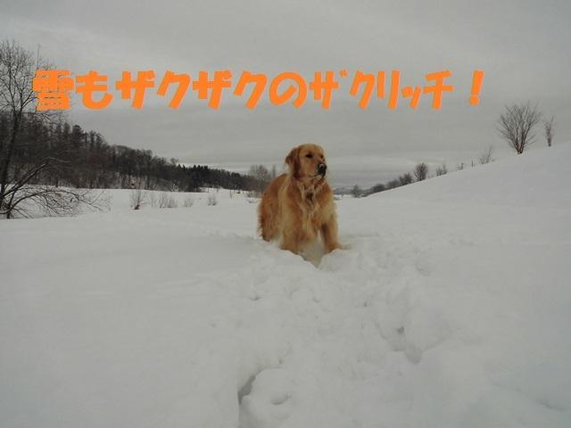 CIMG4295_P.jpg