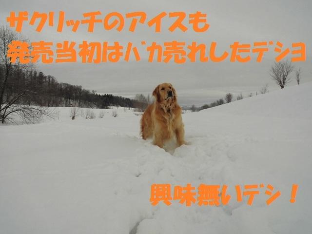 CIMG4296_P.jpg