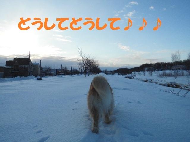 CIMG4304_P.jpg