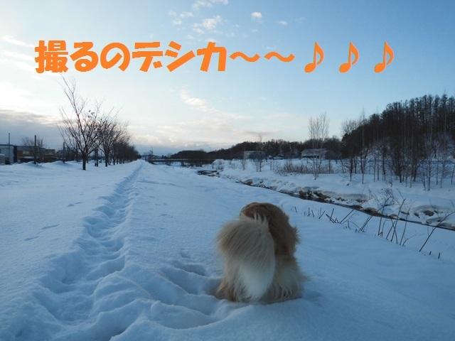 CIMG4306_P.jpg