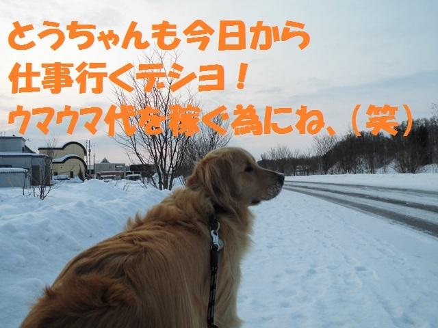 CIMG4313_P.jpg