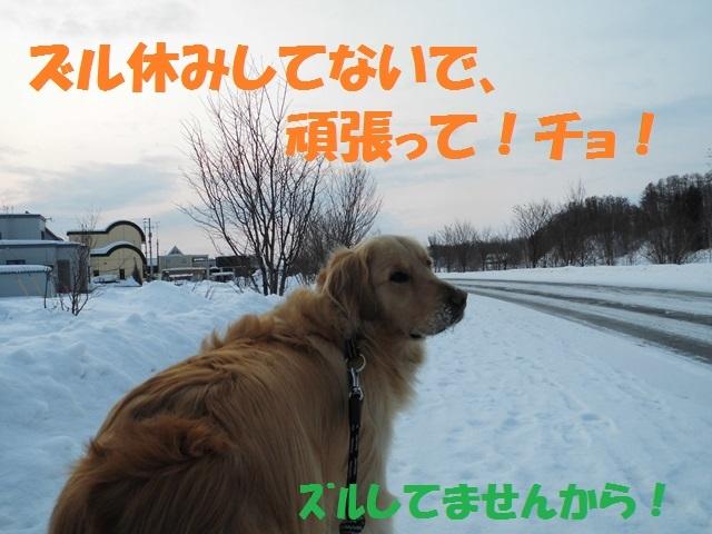 CIMG4314_P.jpg