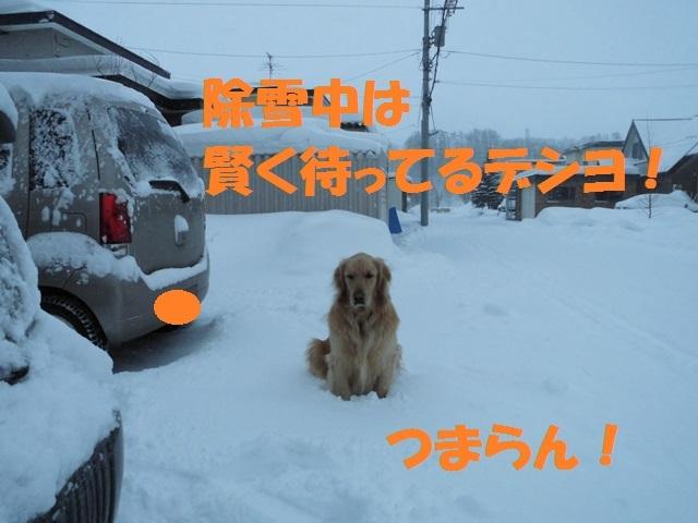 CIMG4336_P.jpg