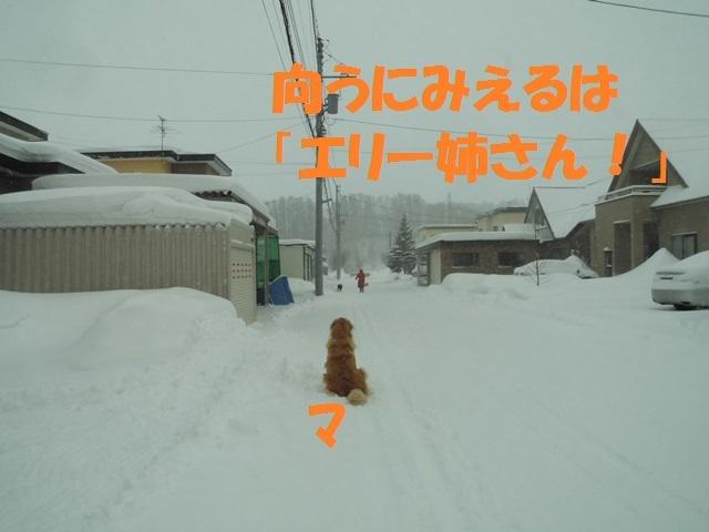 CIMG4337_P.jpg