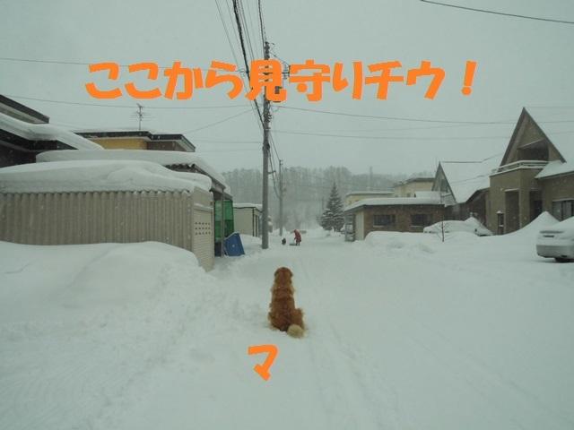CIMG4338_P.jpg