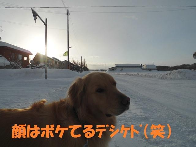 CIMG4346_P.jpg
